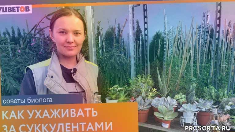 комнатные растения, биолог о растениях, какие бывают суккуленты, уход за суккулентами, как ухаживать за суккулентами, виды суккулентов, суккуленты, цветочная база