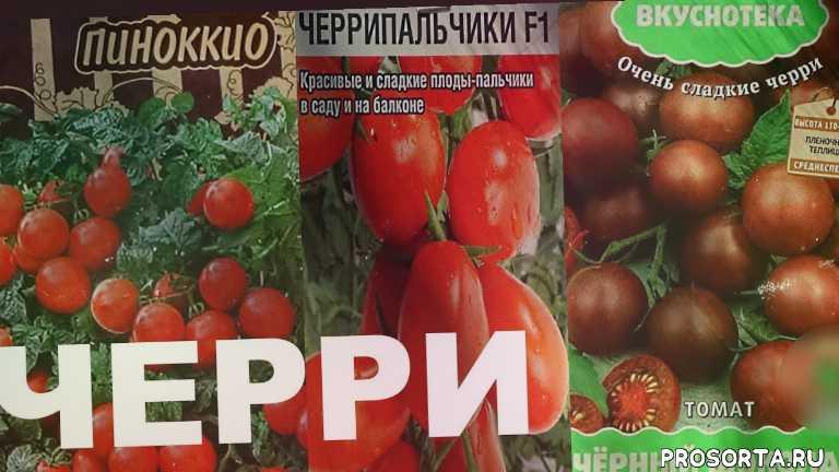 любимая усадьба, лучшие сорта томатов, томаты в теплице, лучшие томаты, сад и огород, огород, выращивание черри, семена томатов