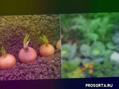 капуста, фасоль, помидоры, перец, морковь