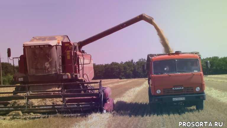 трактористы, уборка урожая, комбайнеры, уборка озимого ячменя, уборка зерновых, уборка 2020