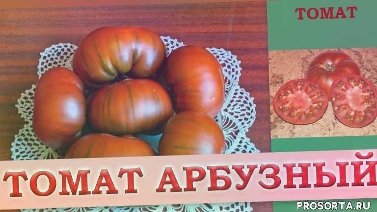 арбузный томат, описание сорта томата арбузный, когда сеять томат, высадка рассады томата, уход за томатом, томат арбузный отзывы, помидор арбузный, томат арбузный