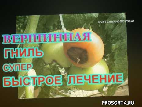 https://www.youtube.com/edit?o=u&video_id=cwcpcrad3l0, svtlana-obovsem, вершинная гниль борьба, помидоры болезни и лечение, болезни помидор в теплице, болезни томатов в теплице, вершинная гниль на помидорах, болезни помидор