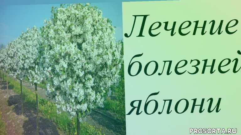 все для сада и огрода, делай сам, лечение яблони, болезни яблони