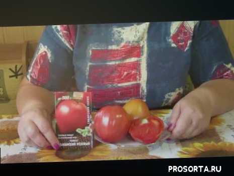 томаты сорта, томат розовый, томат сердцевидный, томат бычье сердце, томат абаканский розовый, томаты