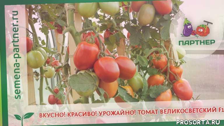 во саду ли в огороде, урожайный огород, семена с доставкой, купить семена томатов, качественные семена, semena partner, семена партнер, агрофирма партнер