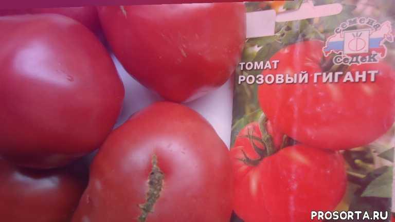 сорт для теплицы томат розовый гигант