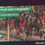 ЛУЧШИЕ СОРТА СЛАДКОГО ПЕРЦА НА 2020 ГОД – Перец с высокой урожайностью // Генерал Врангель F1