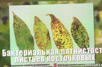 меры борьбы увядание, регулируемое некарантинное, гибель растений, снижение рентабельности садоводства, увядание декоративных, увядание косточковых, плохой урожай косточковых, неурожай косточковых