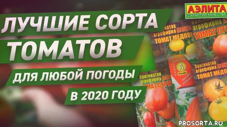 томаты 2019 форум, томаты 2019 года, рассада томатов от а до я, рассада томатов без пикировки, посадка томатов в 2019 году, посадка томатов в открытый грунт, посадка томатов в теплице, посадка томатов в ведра