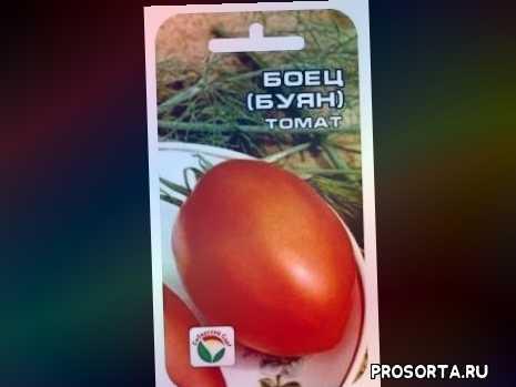 отзывы, рассада, скороспелый, грунт, открытый, низкорослый, томат, буян