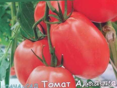 томат аделина, дизайн, фрукты, урожай, теплица, малина, ягоды, помидор