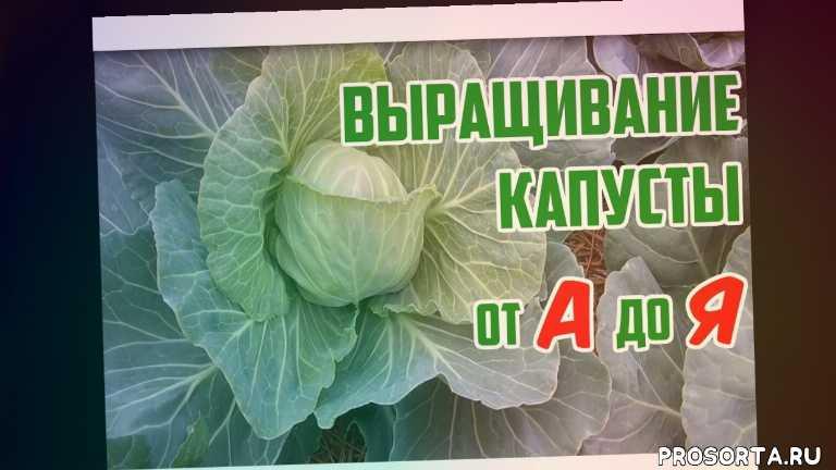 борьба с вредителями, тля, уход за капустой, как выращивать капусту, lamp, led lamp, led, лед лампа