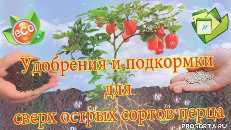 калийные удобрения, фосфорные удобрения, удобрения, подкормки байкал 2, минеральные удобрения для перца, супер острый перец, выращивание перца, перец на подоконнике