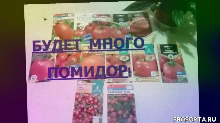 урожайные сорта томатов, сорта томатов на 2020 год, сорта томатов, сорта помидор, сорта томатов для теплиц, урожайные сорта, высокорослые томаты, низкорослые томаты