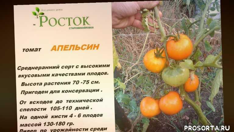 семена продажа донецк, теплицы донбасса, жёлтые томаты