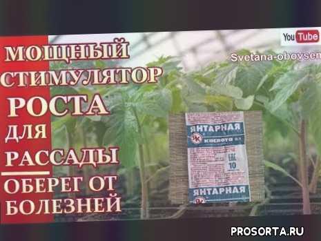 замачиваем семена янтарной кислотой, замачивание семян, сам себе доктор, svetlana-obovsem, вредность янтарной кислоты, усилинный раствор янтарной еислоты, повысить иммунитет, чудо удобрение для рассады