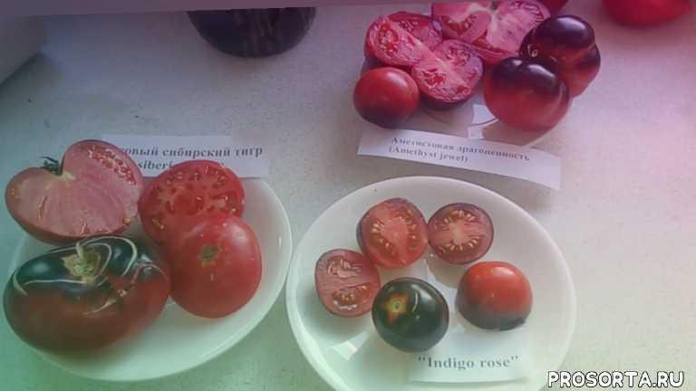 урожайные, экзотические томаты, антоциановые помидоры, антоциановые томаты, синие помидоры, помидоры синего цвета, сладкие томаты, разноцветные томаты