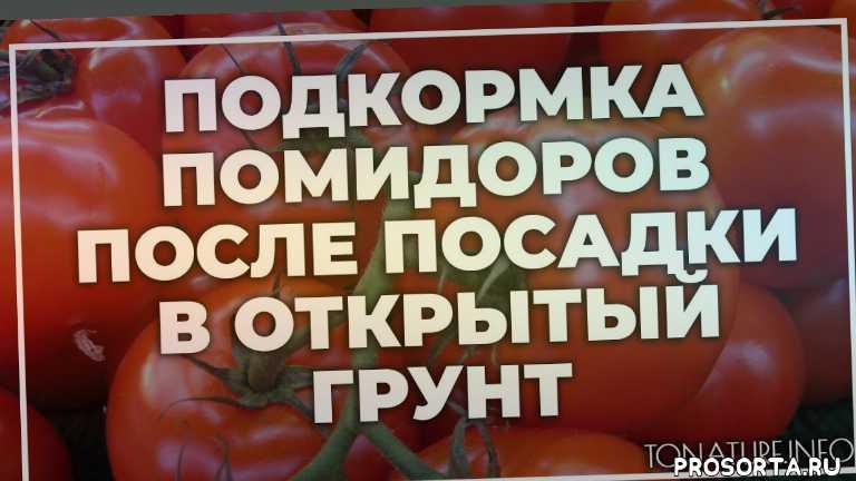 земля дляпомидоров, почва для помидоров, помидоров полив, помидоров вредители, помидоров болезни, помидоров удобрение, помидоров подкормка, помидоров пересадка