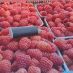 Чудо малина!!! Высокий урожай,  ароматный вкус, большой размер ягоды! Самый лучший сорт малины!