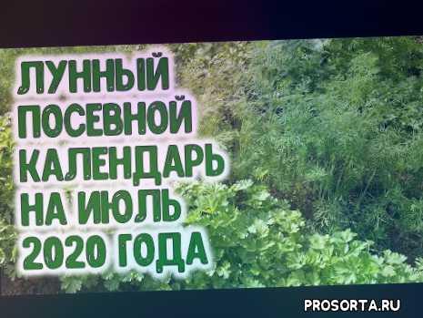 в июле 2020, благоприятные дни посева, знали, знаете, а вы знали, выращивание, календарь огородника, цветы на рассаду
