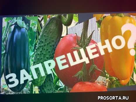 vogorode.pro, огород про, вогороде про, в огороде про, как ориентировать теплицу по сторонам света, совместные посадки в теплице, совмещение растений в теплице, помидоры и огурцы в одной теплице