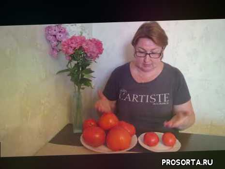 томат розовая катя партнер, томаты фирмы партнер, сорта и гибриды томатов, тепличные томаты, томаты откоытого грунта, томат розовая катя, томат абаканский розовый, томаты розовые