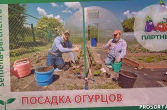 урожайный огород, урожайный, советы опытного дачника, как вырастить огурцы в открытом грунте, сорта огурцов, можно ли огурцы, выращивание огурцов, огурцы семена