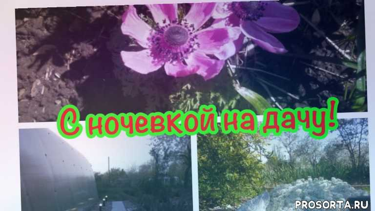 обзор д, моя дача, дизаин, ландшафтный дизаин, цветы, дача весной, идеи для дачи, сад