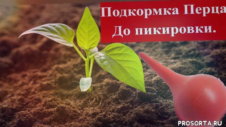 подкормка до пикировки, вытягивание рассады, перевалка, рассадка, земля, почва, подкормки, огород