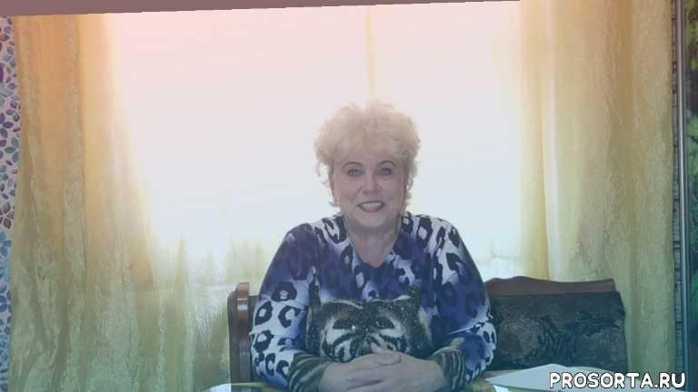 """ТОМАТ ЗАГАДКА ПРИРОДЫ - НАИВКУСНЕЙШИЙ  """"БИКОЛОР""""! Ольга Чернова."""