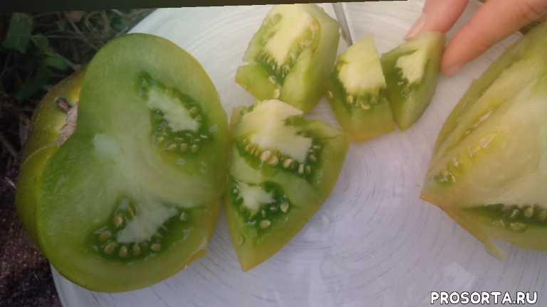 зеленые сорта томатов, сорта томатов, сбор урожая томатов в теплице, сбор урожая томатов, томат, томаты, помидоры, томат для теплицы сорта