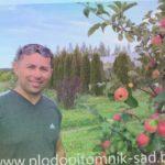 Яблоня сорт ПЕПИНКА ЗОЛОТИСТАЯ. Украинский сорт яблок на белорусской земле.