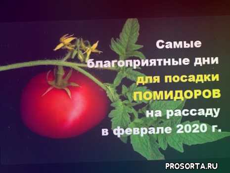 рассада помидор 2020, посадка томатов 2020, посадка помидор на рассаду, посадка томатов на рассаду, посадка томатов, посадка помидор, помидоры в феврале, посадка помидор в феврале