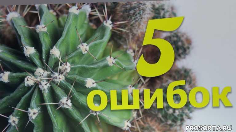 кактусы приметы, кактусы уход, azflora, кактус гниет, почему вытягивается кактус, проблемы с кактусами, топ 5 ошибок кактусы, комнатные растения