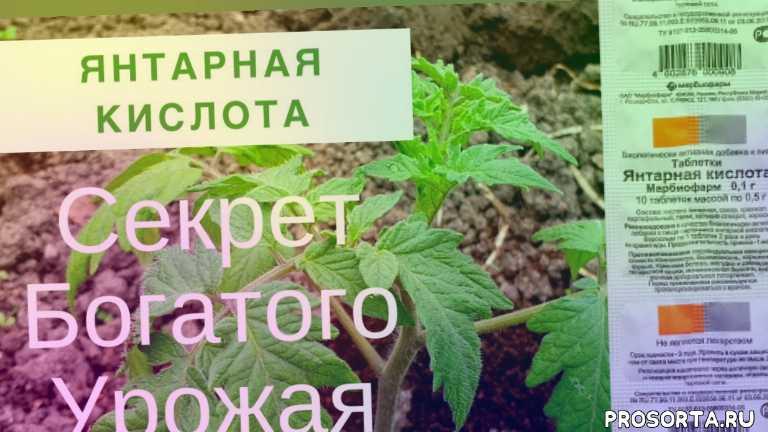 подкормка растений, обработка янтарной кислотой орхидей, янтарная кислота для комнатных растений, янтарная кислота для цветов, янтарная кислота для огурцов, янтарная кислота в огороде, янтарная кислота, полив янтарной кислотой