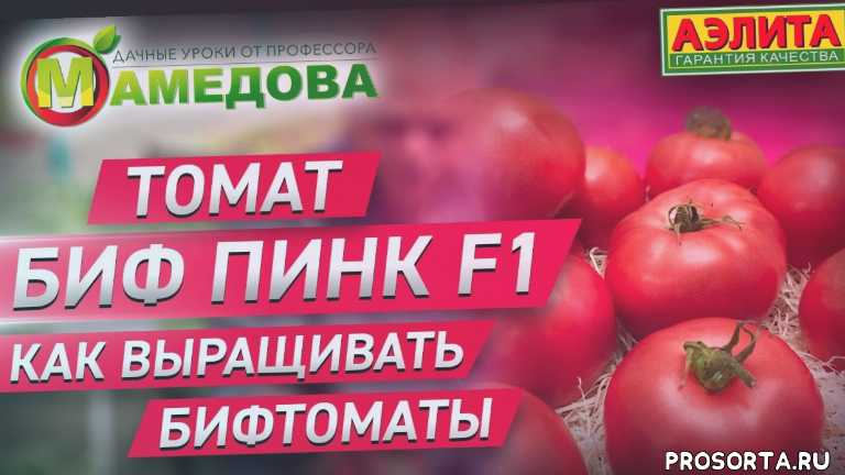 томаты, теплица, сорта томатов, семена, рассада, помидоры, помидор, огород