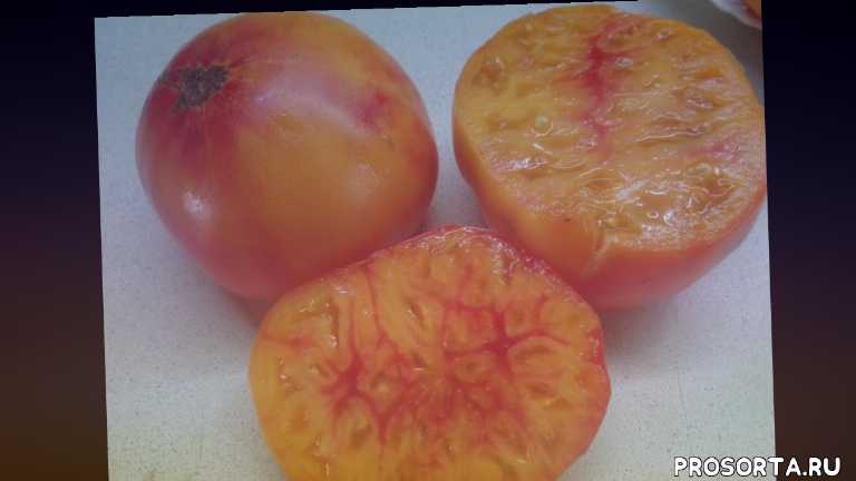 ольга чернова., томат биколор двухцветный, томат загадка природы, самый сладкий томат, сад огород