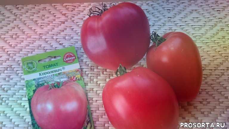 помидоры грунт, лучшие сорта помидор, томаты посадка, помидоры посадка, тема помидоры, урожайный, урожай, в саду в огороде