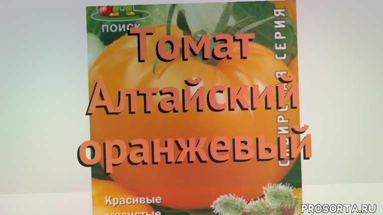 томат обыкновенный алтайский оранжевый обзор, томат алтайский оранжевый обзор как сажать, травы, обыкновенный томат алтайский оранжевый обзор как сажать, обыкновенный томат алтайский оранжевый обзор, обыкновенный томат, обыкновенный томат алтайский оранжевый, алтайский оранжевый обзор