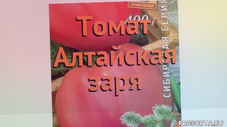 семена, томат обыкновенный алтайская заря обзор как сажать, томат обыкновенный алтайская заря обзор, томат алтайская заря обзор как сажать, травы, обыкновенный томат алтайская заря обзор как сажать, обыкновенный томат алтайская заря обзор, обыкновенный томат