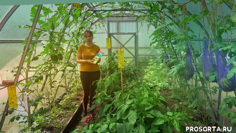 урожайный огород, средство, теплица, сад, дача, огород, белокрылка