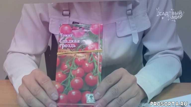 против фитофторы, препараты от фитофтороза, семена томатов., надежные томаты, как выбрать семена томатов, выбираем сорта томатов, устойчивые томаты, томаты без фитофторы