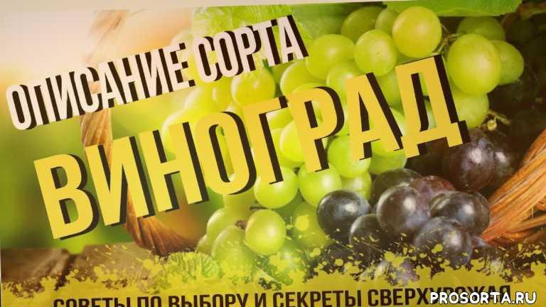 agro-market, советы садоводам, сорта винограда, виноградник, купить, выращивание, посадка винограда, агромаркет отзывы