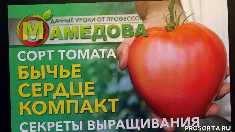 агрофирма аэлита, бычье сердце отзывы, выращивание томатов от а до я, выращивание томатов в теплице, выращивание томатов в открытом грунте, выращивание томатов в 2019, томаты для посадки 2019, томаты на 2019