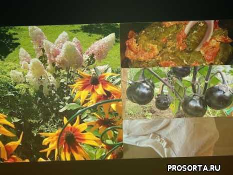 галина андреева, garden, покупки фабердлик, сезон 2020 урожай, как приготовить долму быстро, кабачковые оладьи, завтрак что приготовить, влог галина андреева