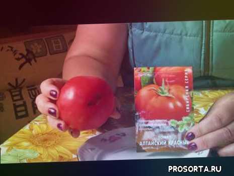 томат алтайский обзор, дегустация томатов, томаты