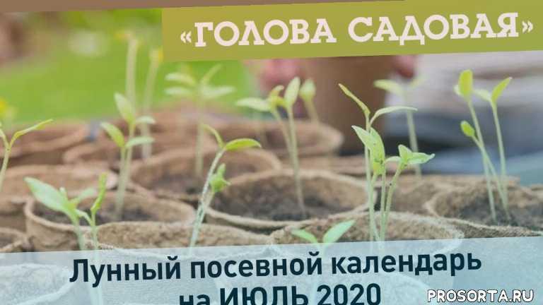 2020, красноярск, 26 июня, июль 2020, календарь, календарь на июль 2020, посевной календарь, лунный посевной календарь на июль 2020