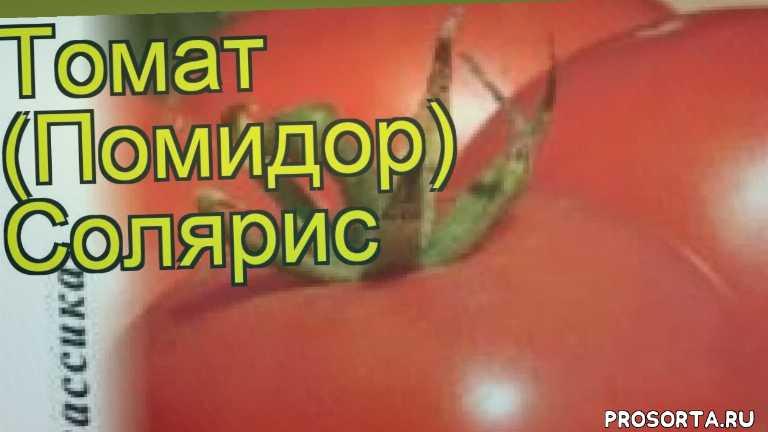 томат солярис какие растения сажают рядом, томат солярис посадка и уход, томат солярис уход, томат солярис посадка, томат солярис отзывы, где купить семена томат солярис, купить семена томата солярис, семена томат солярис