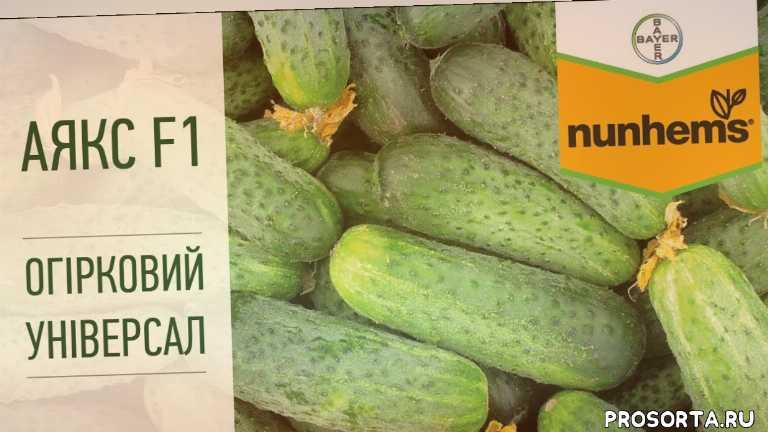 аякс, корнішони, корнишоны, cucumber, огірки, выращивание огурцов, как вырастить огурцы, универсальный огурец