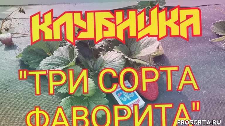 #крапо10 #мальга #кабрилло #сад #огород #дача